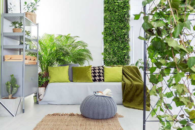 Plante, descoperă cum reușesc să vă îmbunătățească sănătatea